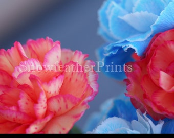 Colorful Carnations - Ships Free