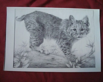 Bobcat On The Prowl Original Graphite Drawing by Chuck Hafner Print
