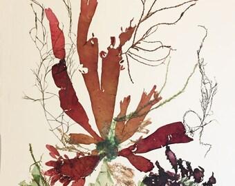 Seaweed art, Pressed seaweed, collage seaweed pressing, victorian Botanical seaweed artwork, beach cottage, nautical decor,16x20