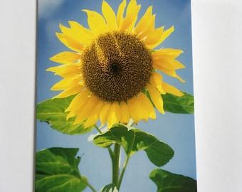 Greeting Card - Happy Days Sunflower