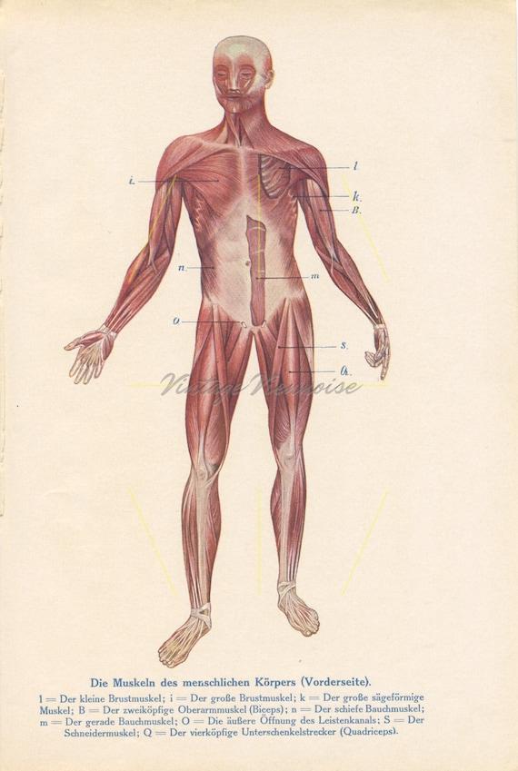 Jahrgang Anatomie Drucke. Menschliche Anatomie Kunst.