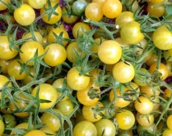 White Cherry Tomato Heirloom Garden Seed  Non-GMO 30+ Seeds Natural Grown Open Pollinated Gardening