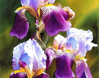 Sunny Iris, GICLÉE PRINT of my original painting, beautiful flowers, watercolor flower, watercolor iris. EsperoArt.