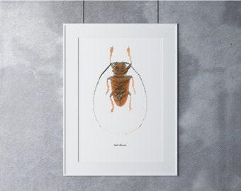 Beetle Digital Art, Digital Art Print, Digital Art Download, Digital Graphics, Printable Art, Digital Print, Nature Art Print, Brown Black