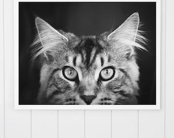 Black and White Cat Photo, Maine Coon cat print Maine Coon Photo, animal art print, Cat Print, cute kitten, cat art, nursery decor, wall art