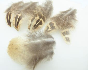 Assortment of small feathers. Lot 5