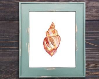 Shell No. 1212 Print, Shell Decor, Shell Art, Beach Art, Beach Wall Art, Nautical Painting, Shell Watercolor, Shell Wall Art, Watercolor She