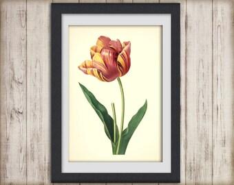 Digital Botanical Print - botanical poster - artwork- tulip - botanical illustration - botany print - INSTANT DOWNLOAD ART No 25