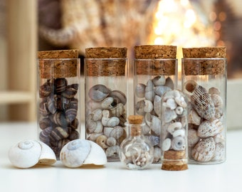 Land Snails Collection