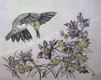 Print of Mixed Media of  Hummingbird Hovering over Flowers using Strathmore Drawing Paper.  Size 15x12