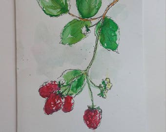 Raspberries Watercolour
