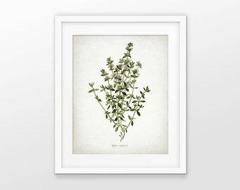 Thyme Herb Art Print - Thyme Herb Plant - Thyme Herb Botanical - Kitchen Herb - Kitchen Decor - Single Print #1639 - INSTANT DOWNLOAD