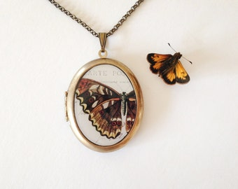 Brown Butterfly 'Papillon' Locket -  Naturalist Vintage Illustration - Brass Locket Necklace
