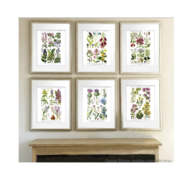 Wild Flowers Botanical Prints set of 6 Botanical Prints