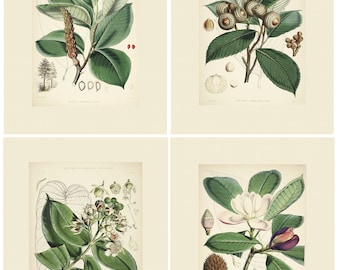Botanical Prints Set of 4 Green Leaves and floral Each print 16 x 20