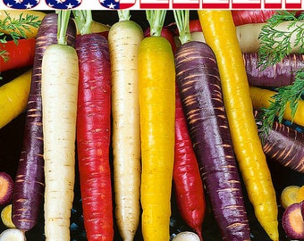 150+ ORGANICALLY Grown Rainbow Blend Carrot Seeds Heirloom NON-GMO Rare Healthy Flavorful