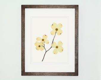 Pressed Botanical Art Print, Dogwood Print #102, Botanical Print, Fine Art Print, Wildflower Print, Pressed Flower Art, Botanical Wall Art