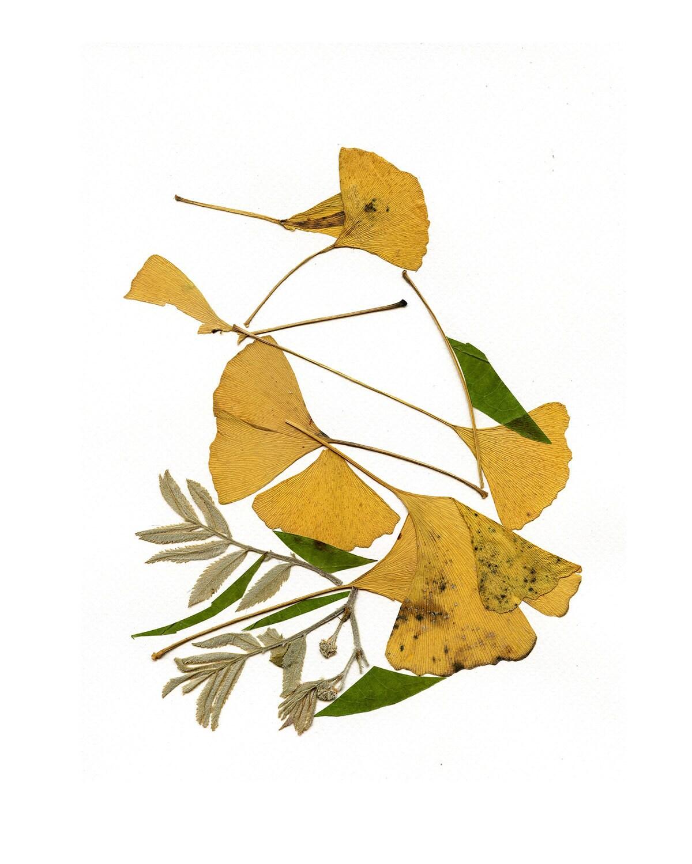 Drucken Sie botanische Kunst aus gepressten Blumen Vogel Druck