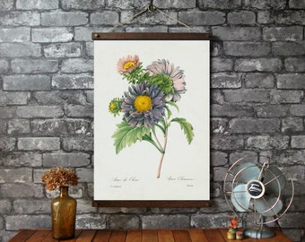 Aster Botanical Chart / Vintage Pull Down Chart Reproduction / Canvas Fabric Print / Oak Wood Poster Hangers with Brass / Wall Hanging
