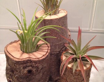 Rustic wood stump log air plant tillandsia wedding bridal shower favors - Customizable!
