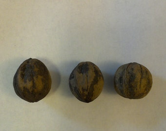 3 english walnut nuts organic Free Shipping