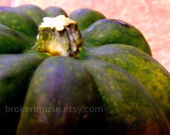 close up of acorn squash - Fine Art Photography ACEO - Taste of Autumn