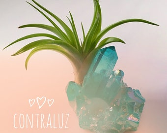 Ice Blue Air Plant Crystal Garden, Healing Crystal Garden, Blue Air Plant Crystal, Indoor Air Plant Garden