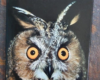 Owls, Owls Book, John Sparks, Tony Soper, Book Owls, Owls 1979, Tawny Owl, Barn Owls, Nesting Owls, Wildlife Birds, Guide to Owls