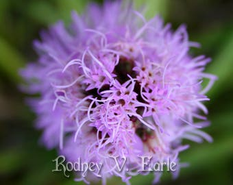 Purple Flower Instant Digital Photo Download