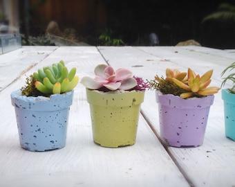 Mini concrete planter set/indoor planter/outdoor planter/turquoise/choice of 5 colors/succulent planter/cactus planter/air plant vessel