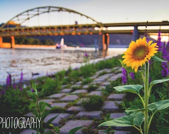 Pittsburgh Summer  (Cityscape, flower, river, bridge, Fort Pitt, sunset, dawn, dusk)