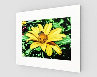 Pollen Picker Canvas Print