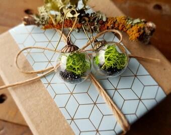 Terrarium Bead Earrings Large
