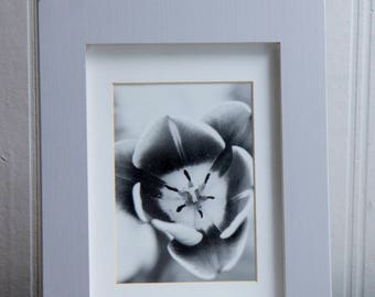 Black and White Photograph, Tulip Flower Framed Print, Film Art Photo