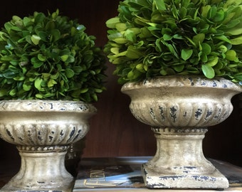 Preserved Boxwood Topiary in Antiqued Ceramic Urn