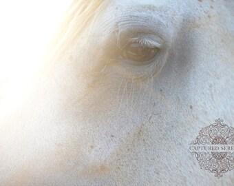 Sun shining beautifully over horse's face