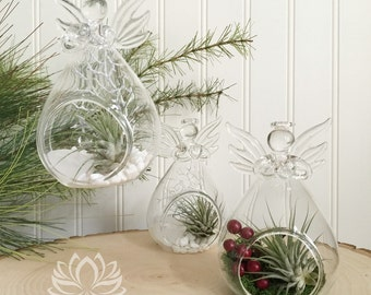Tillandsia Holiday and Snow Angels by Zentilly©