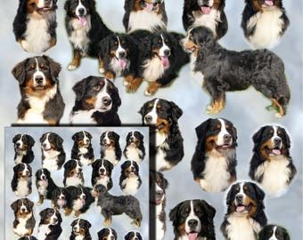Bernese Mountain Dog Gift Wrapping Paper with matching Gift Card