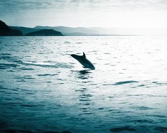ocean photography nautical decor dolphin 8x10 8x12 fine art teal print coastal print dolphin jumping beach scene nature photography water