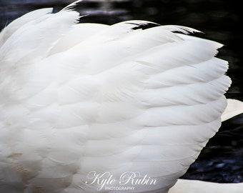The Swan of Swan Lake