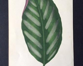Rare Antique 1865 LOWE'S BOTANICAL Bookplate Wood Block Print Botany Plants Home Decor