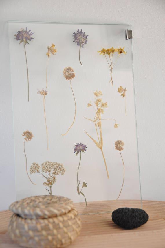 Herbarium pressed flower frame