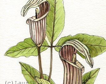 Jack in the Pulpit Woodland Watercolor Original Art Wildflower Botanical Illustration Nature Painting