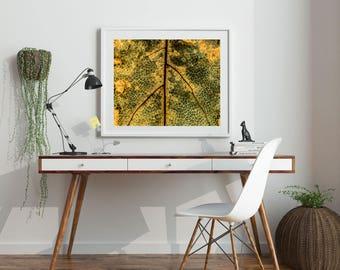 "Nature Print, Nature Photography, Autumn, Fall Art, Printable Art, Printable Wall Art, Macro Photography, Gold, Yellow Print, ""Leaf Veins"""