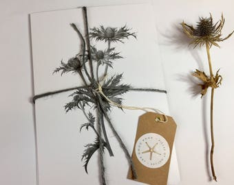 Postcards 5 pack monochrome Seaholly. 5 cards in each pack. A5 postcard. 400g silk board. Flower. Plant. botanical print.