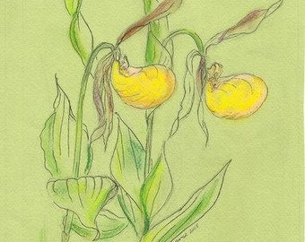 West Virginia Wildflower Small Yellow Lady Slippers