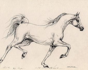 Running grey arabian horse- original pen drawing