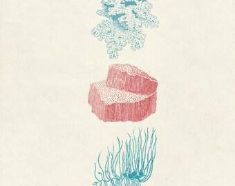 """Vintage Sea Kelp """"Varech"""" Print 8x10 P10"""