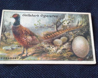 Gallaher Cigarettes Picture Card Birds Nests And Eggs Series No89 Pheasant