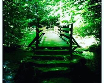 Forest Bridge Photograph Digital Download